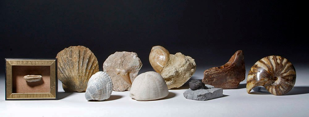 Collection of 9 Fossils - Shell, Trilobite, Teeth, Bone