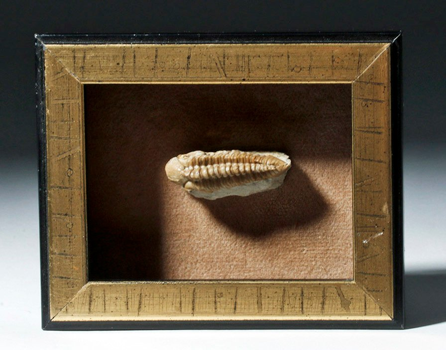 Collection of 9 Fossils - Shell, Trilobite, Teeth, Bone - 4