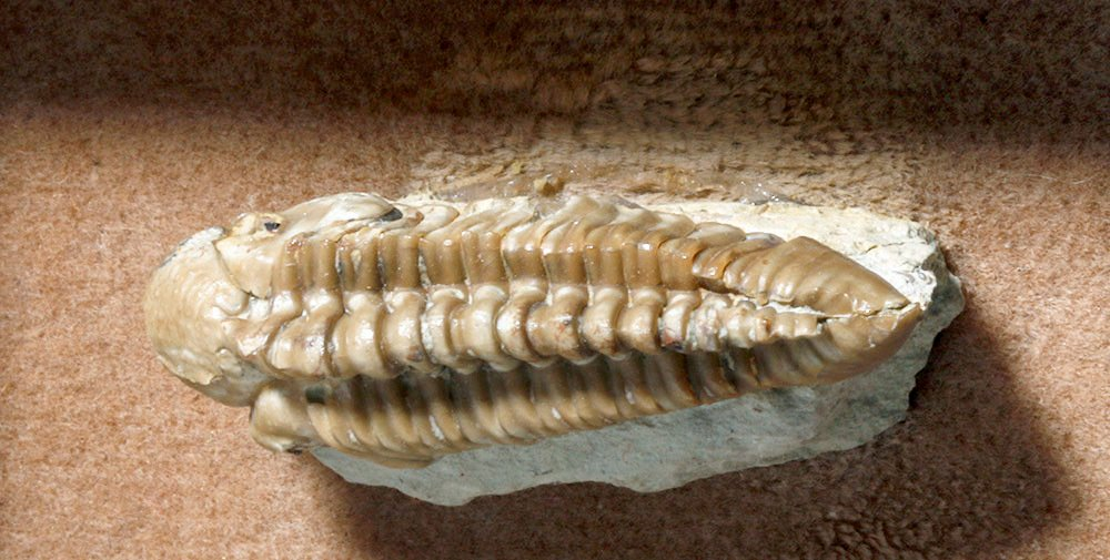 Collection of 9 Fossils - Shell, Trilobite, Teeth, Bone - 5