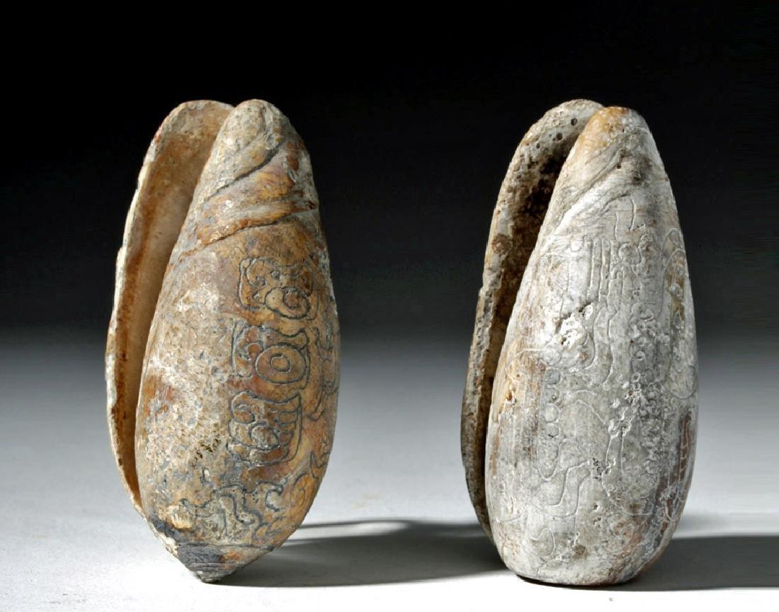 Pre-Columbian Mayan Carved Shells (pr)