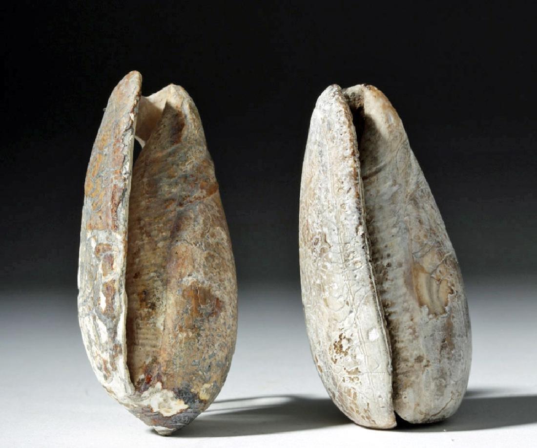 Pre-Columbian Mayan Carved Shells (pr) - 2