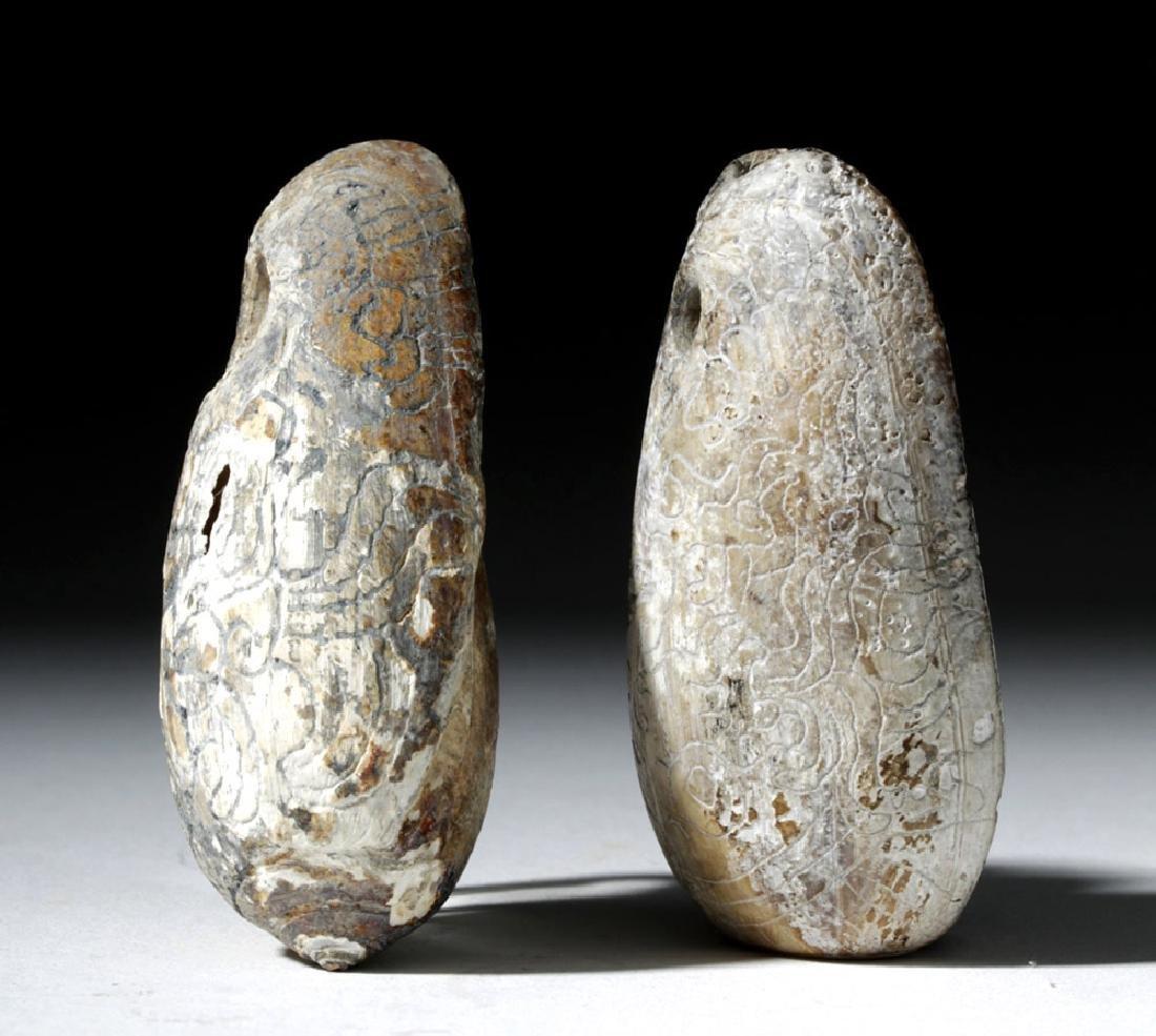 Pre-Columbian Mayan Carved Shells (pr) - 4