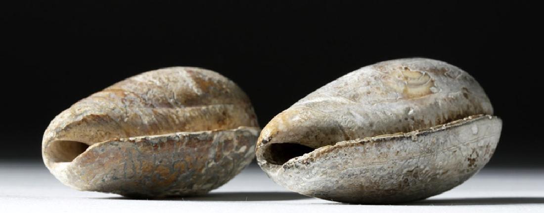 Pre-Columbian Mayan Carved Shells (pr) - 5