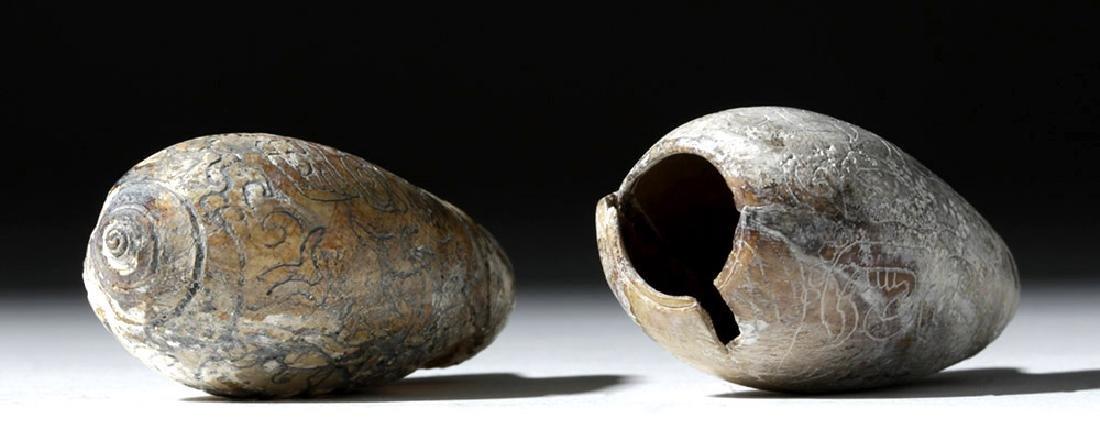 Pre-Columbian Mayan Carved Shells (pr) - 6