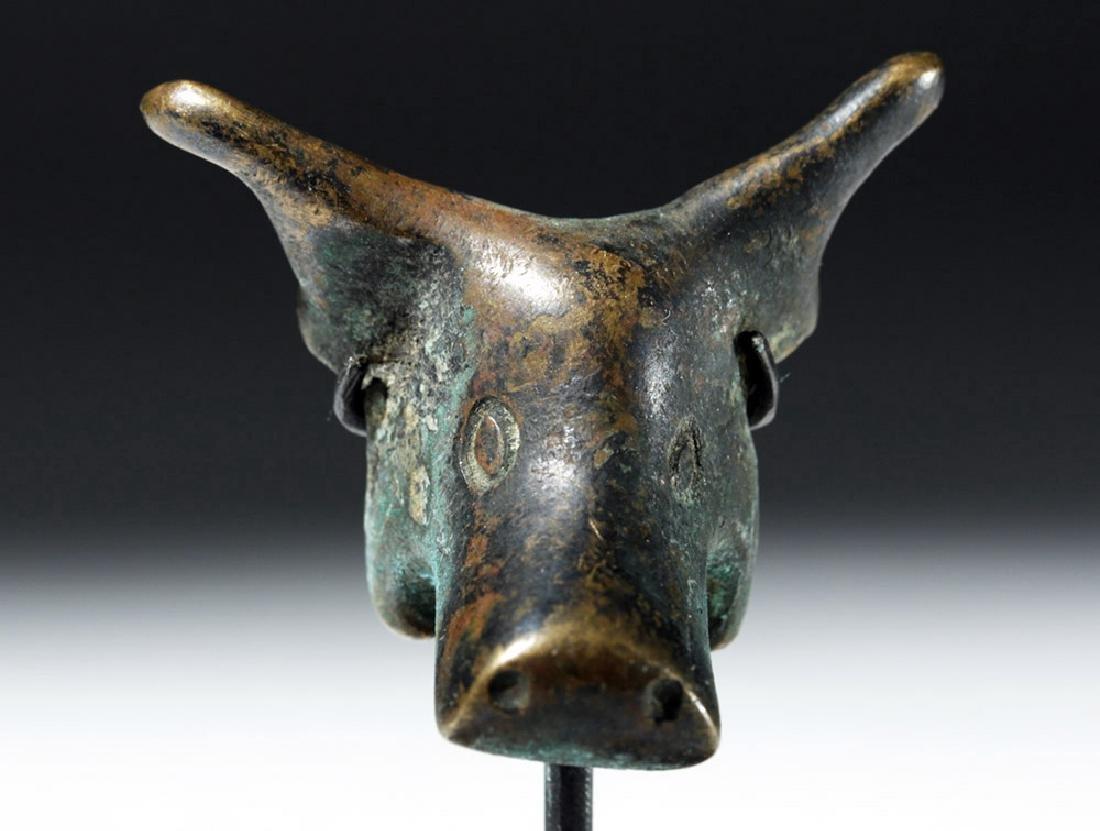 Roman Bronze Bucranium - Bull Head - 5
