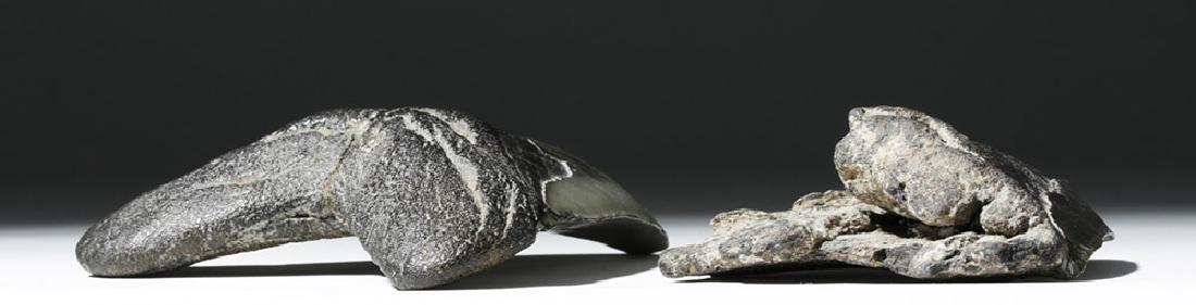 Pair of Large Megalodon Teeth - 4