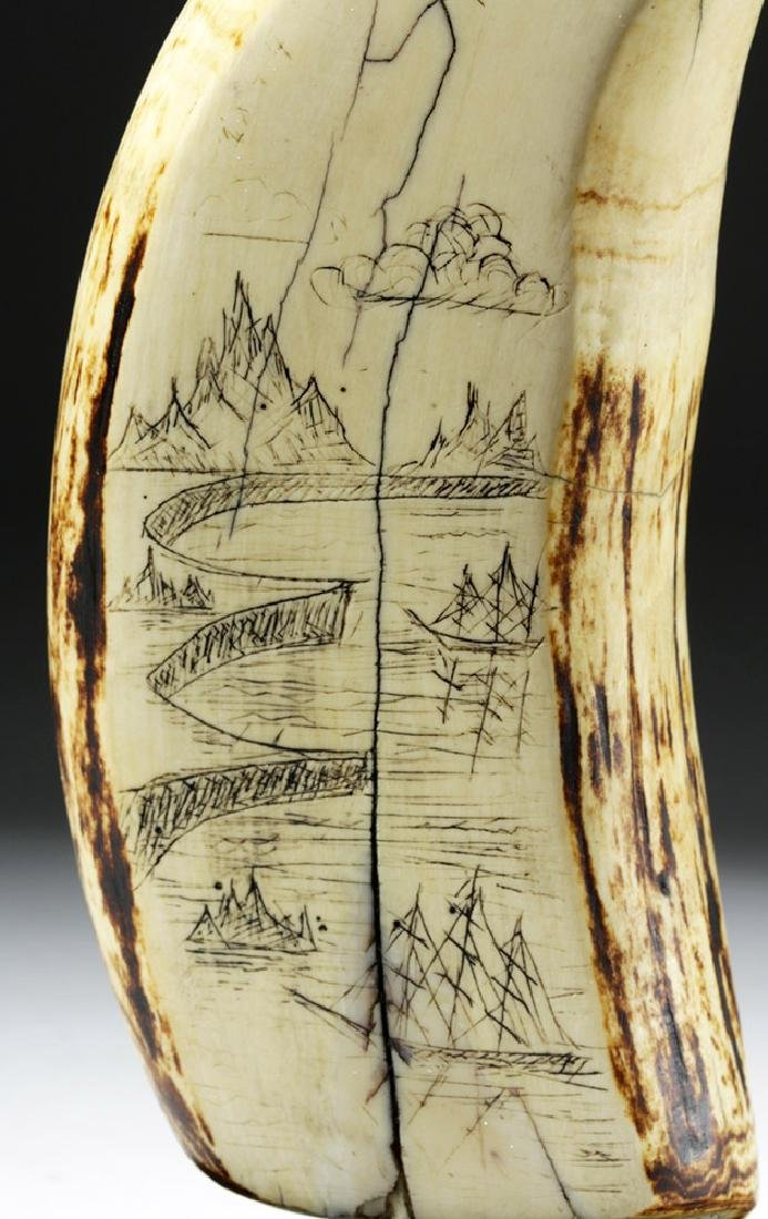 19th C. Sperm Whale Tooth Scrimshaw - Incised w/ 1851 - 2