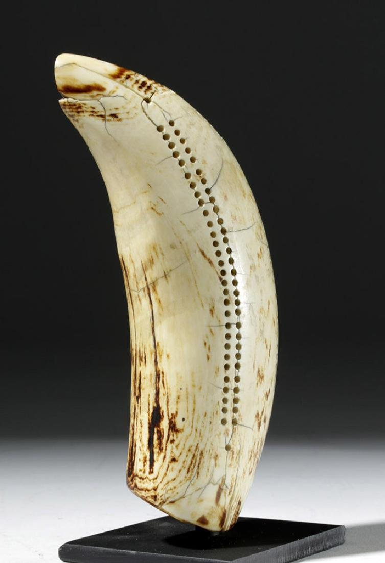 19th C. Sperm Whale Tooth Scrimshaw - Incised w/ 1851 - 3