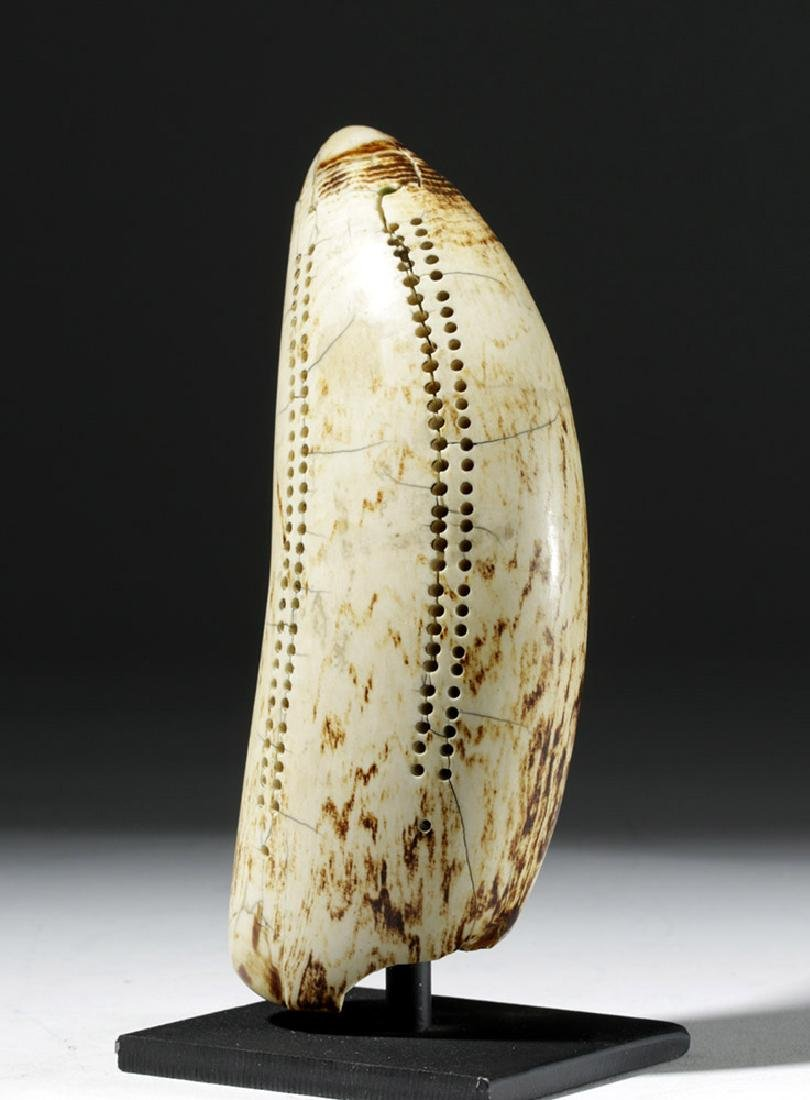 19th C. Sperm Whale Tooth Scrimshaw - Incised w/ 1851 - 4