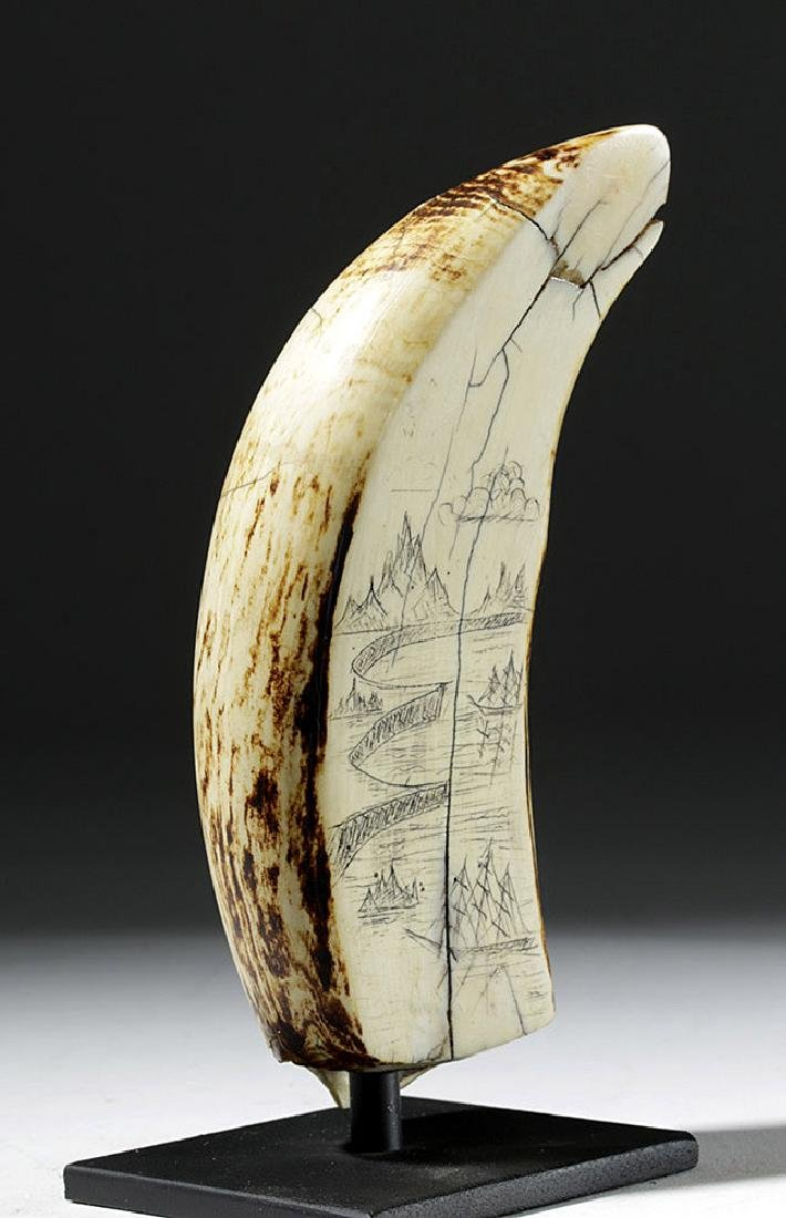 19th C. Sperm Whale Tooth Scrimshaw - Incised w/ 1851 - 5