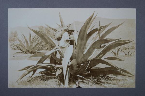3: CHARLES B WAITE (1860-C1929) Album