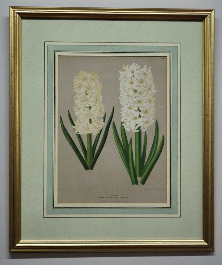 10: DECORATIVE ART OF TWO FLOWERS