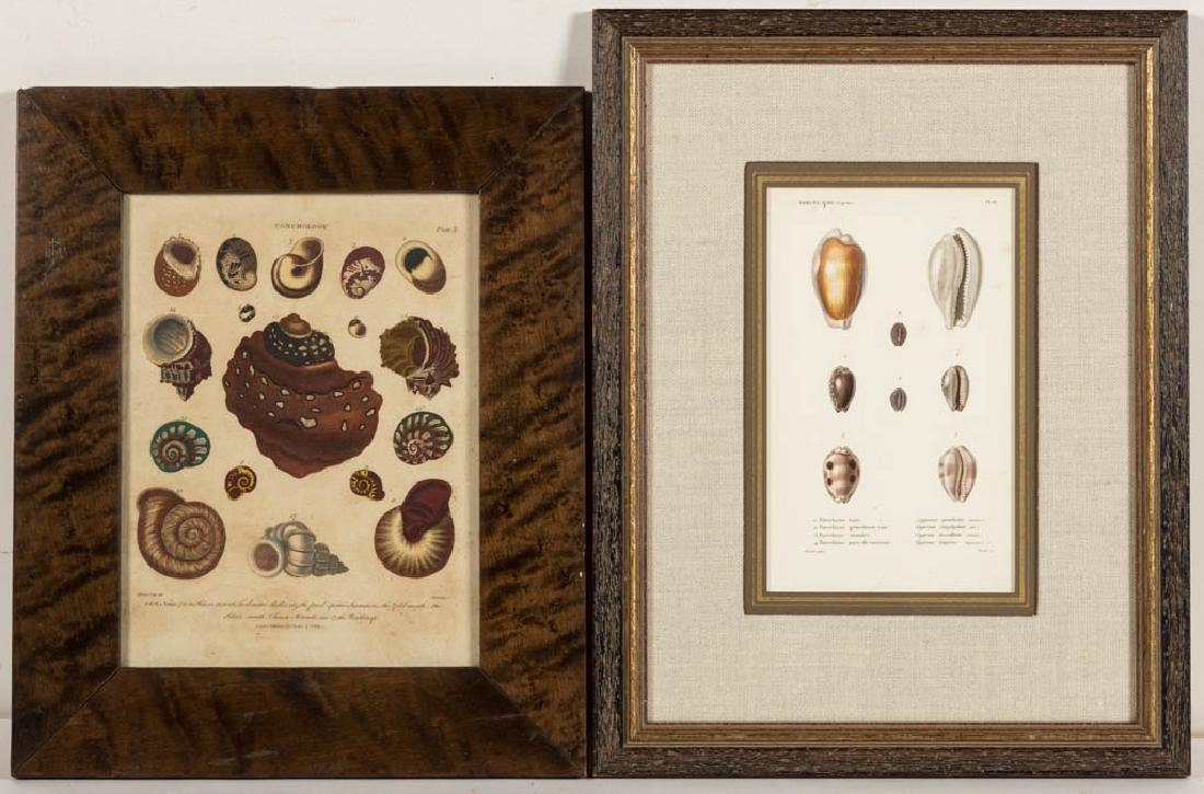 EUROPEAN NATURAL HISTORY PRINTS, LOT OF TWO