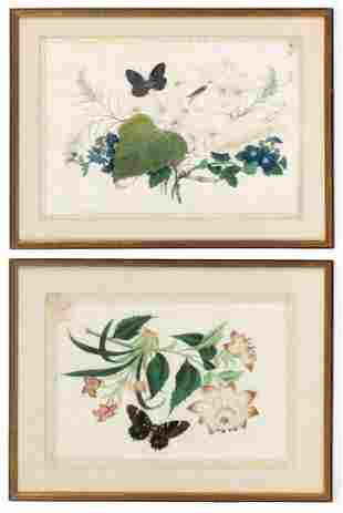 PAIR OF CHINESE RICE PAPER BOTANICAL PAINTINGS