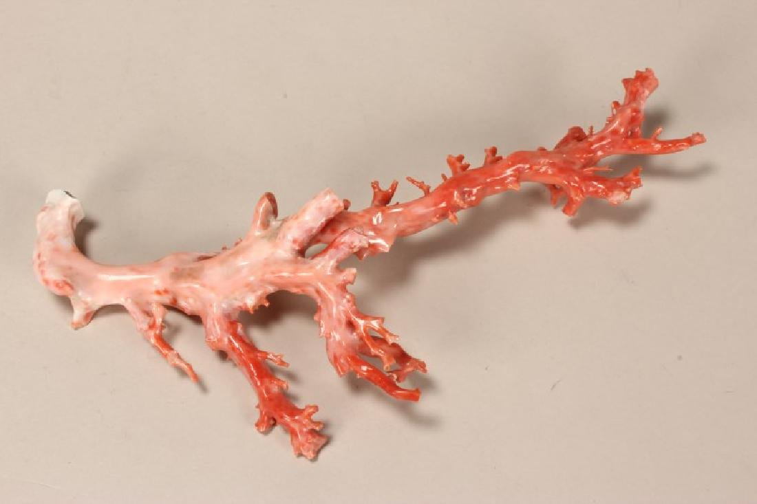 Chinese Coral Branch,