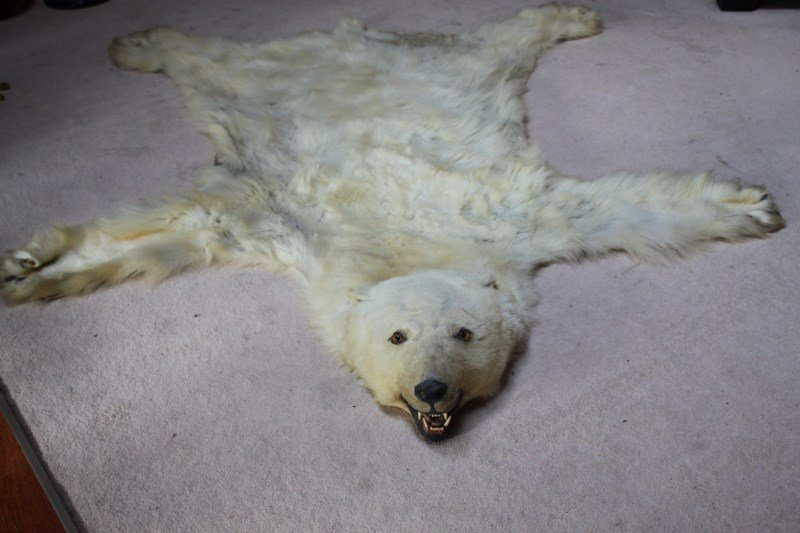 Polar Bear Skin,