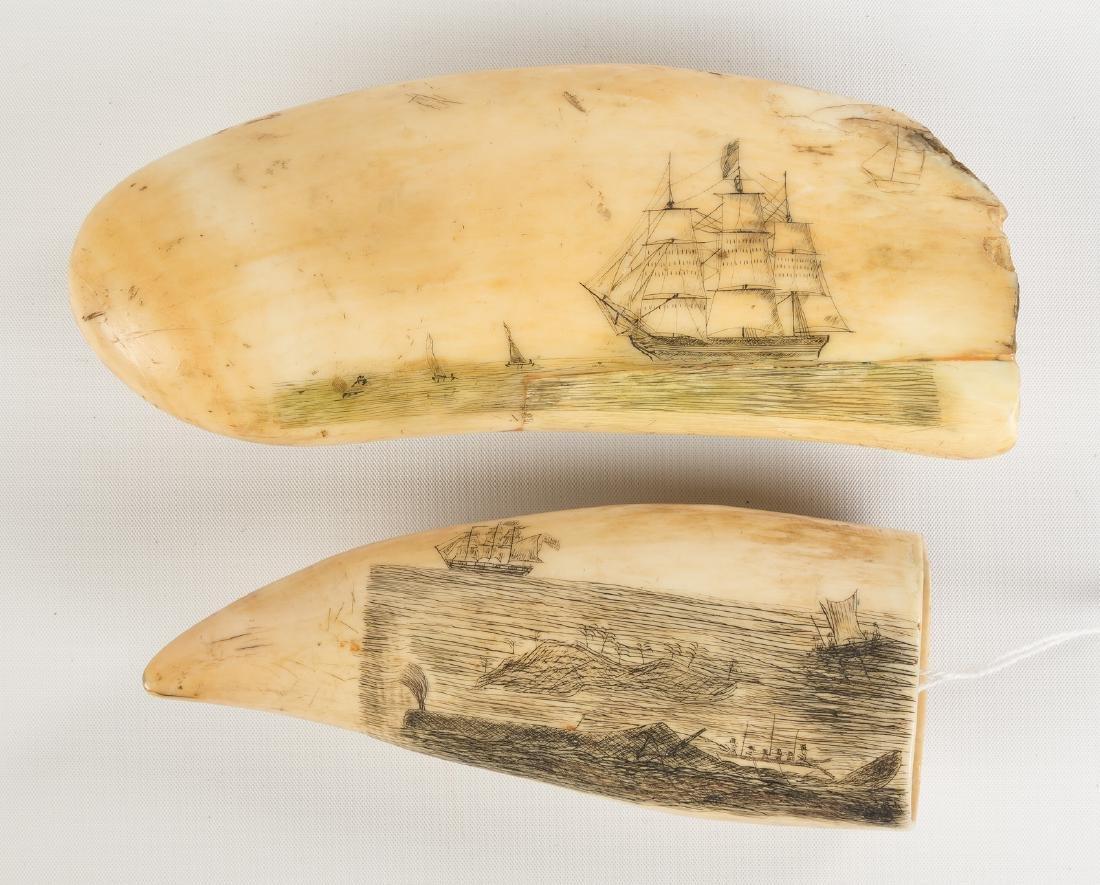Two 19th Century Scrimshaw Whales Teeth