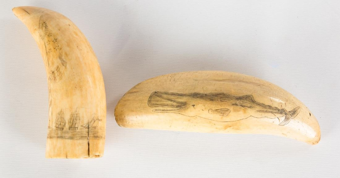 Two 19th Century Scrimshaw Whales Teeth - 2