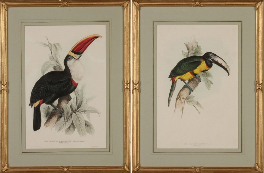 Two Hand Colored Lithographs of Toucans