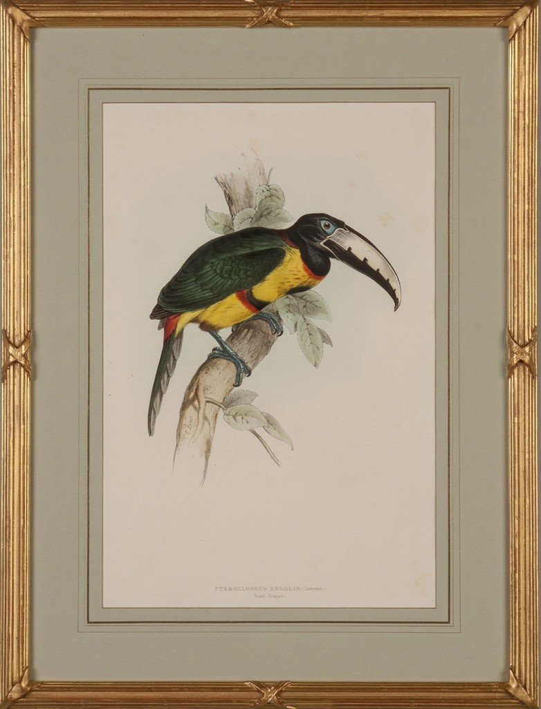Two Hand Colored Lithographs of Toucans - 2