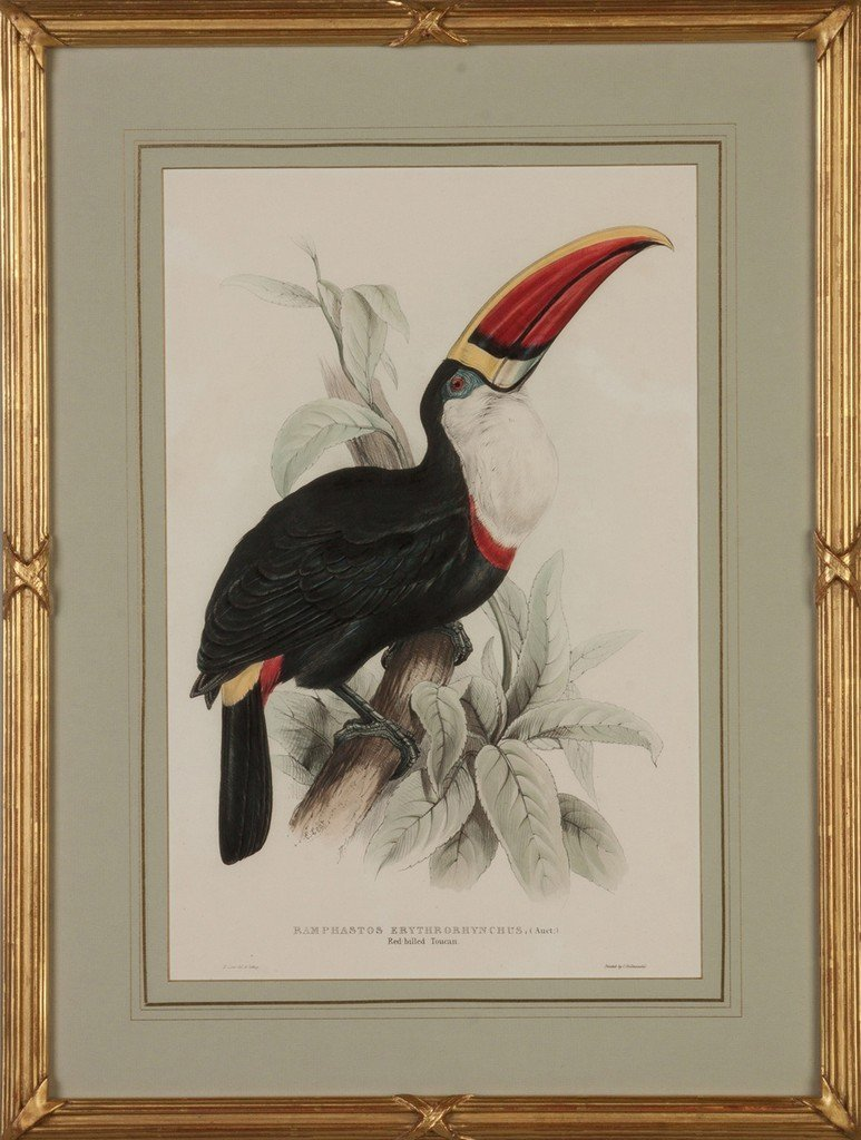 Two Hand Colored Lithographs of Toucans - 3