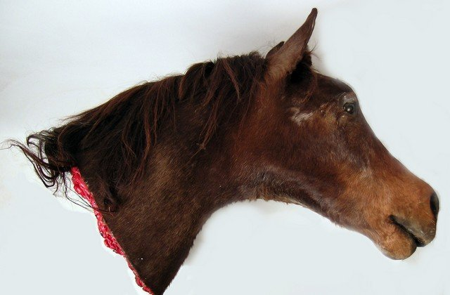 The Godfather Jack Woltz Bedroom Severed Horse Head