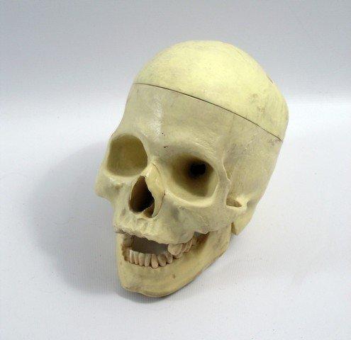 Terminator 2 Human Skull Prop