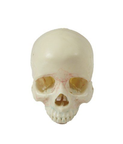 Bones TV Show Skull