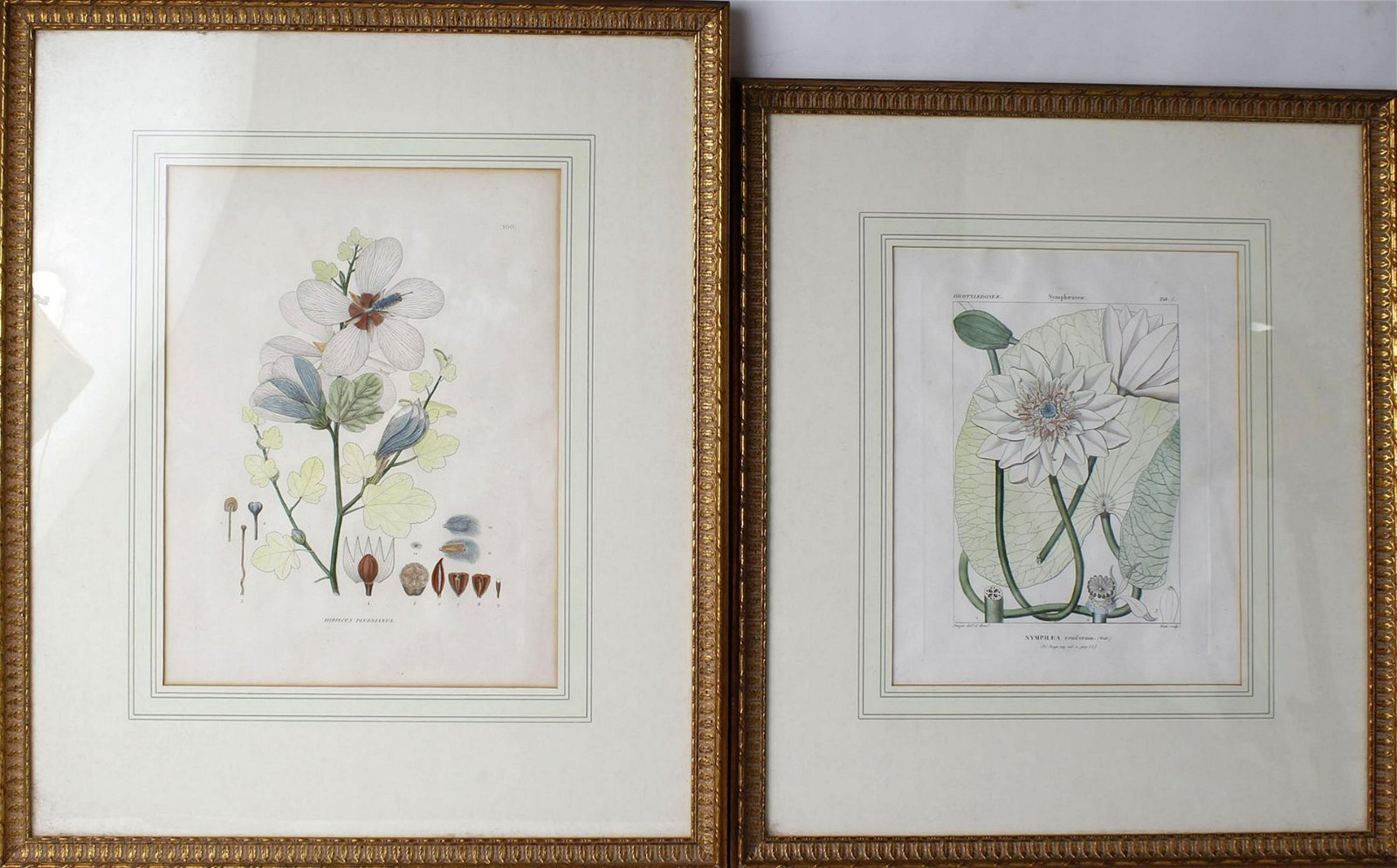 LOT OF TWO HAND COLORED FLOWER PRINTS