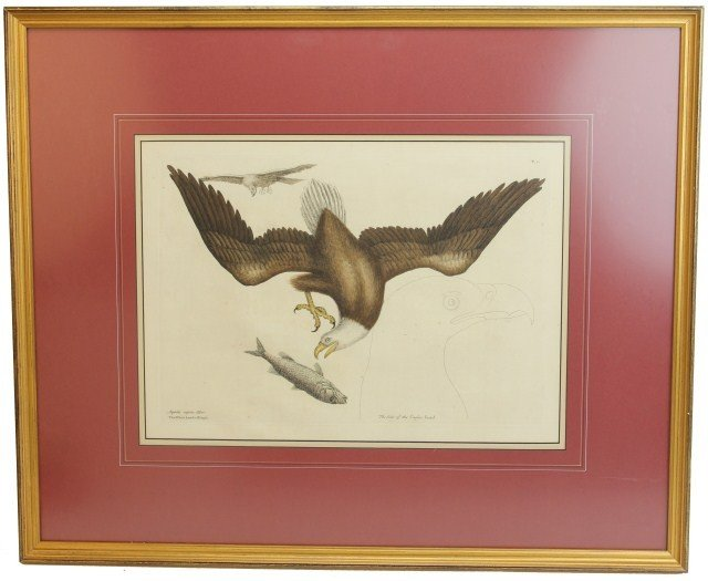 19TH CENTURY PRINT OF A WHITE HEADED EAGLE