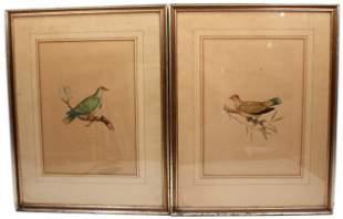 F. WILLY BIRD ILLUSTRATIONS 19TH CENTURY