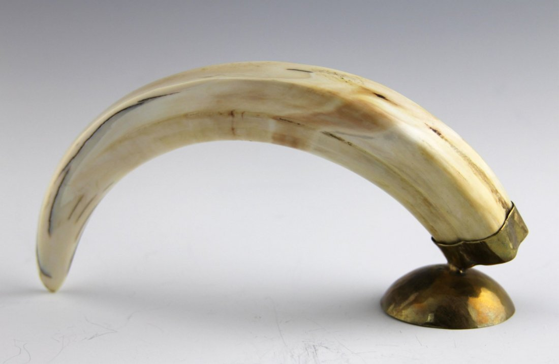 AFRICAN WARTHOG IVORY TUSK WITH SCRIMSHAW - 3