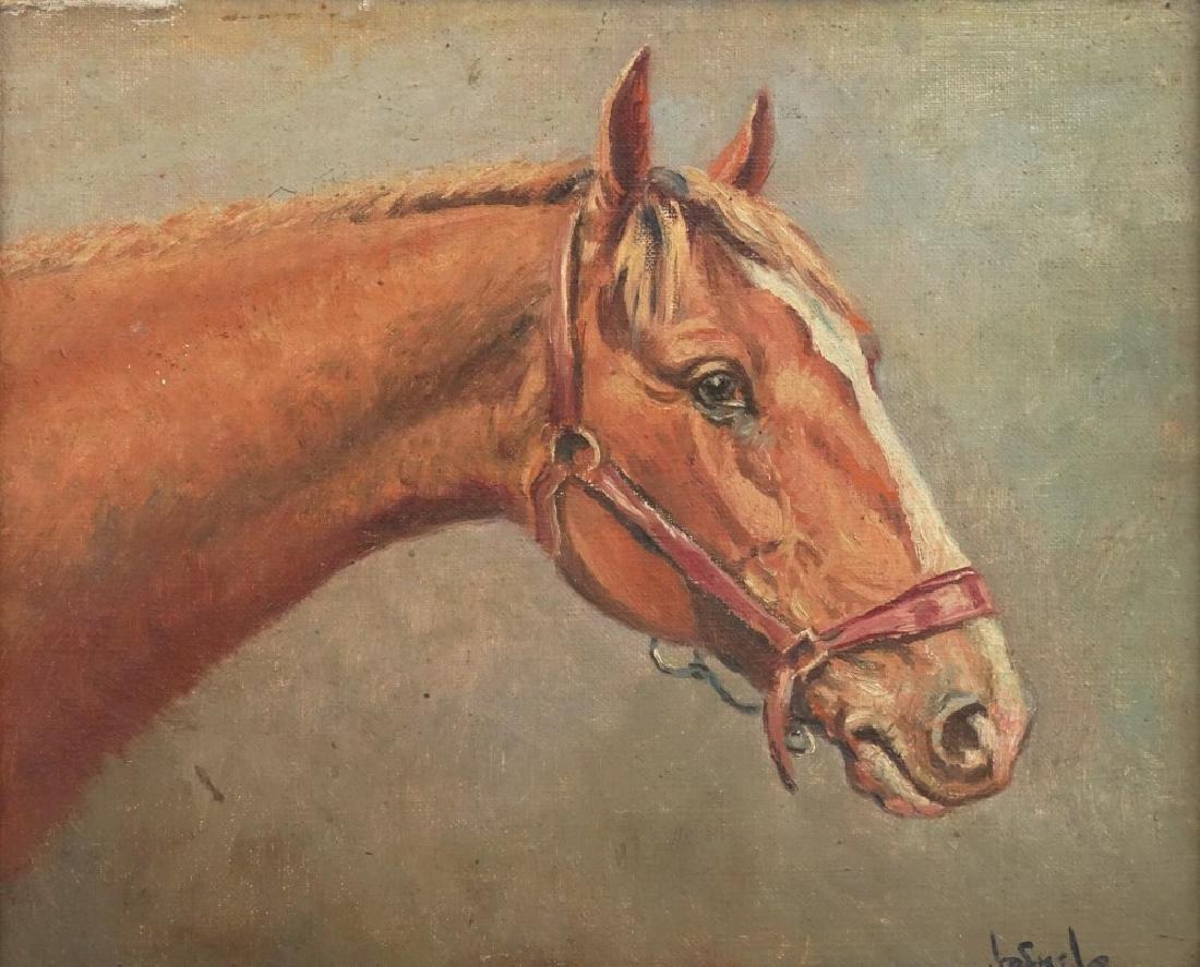 Jafnel, Horse Portrait - 2