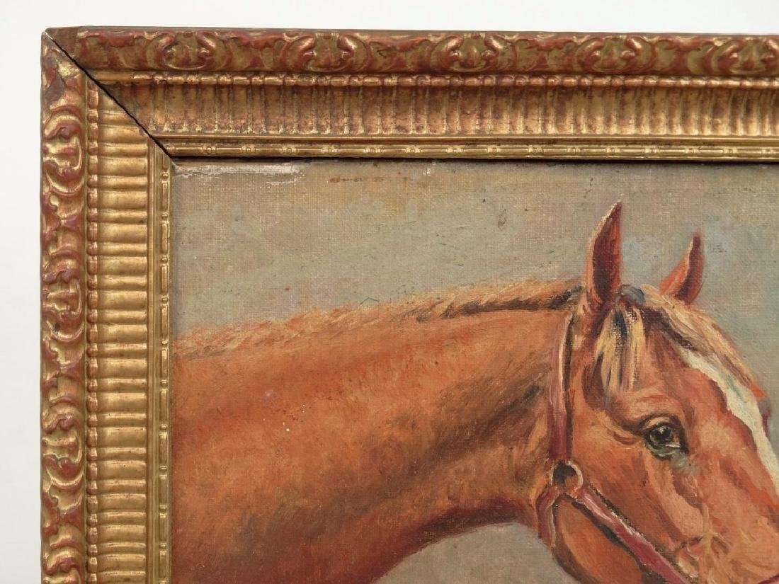 Jafnel, Horse Portrait - 4