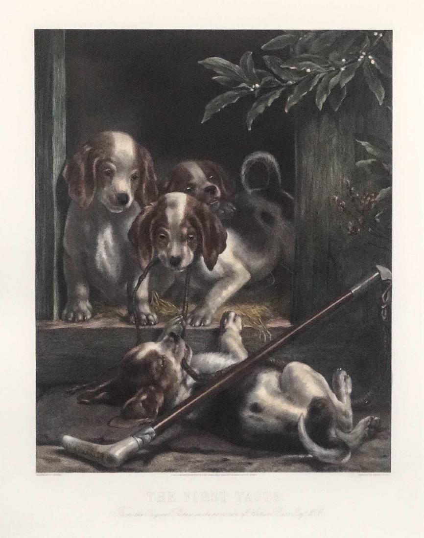 Pair Dog Prints - 7
