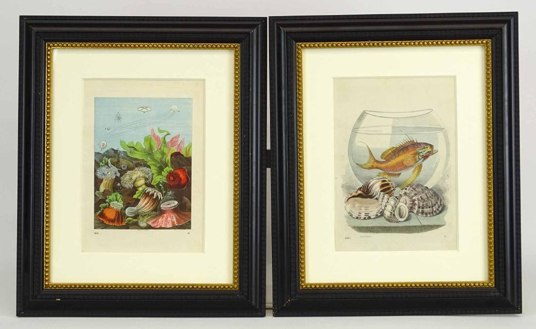 Pair Early Fish Prints