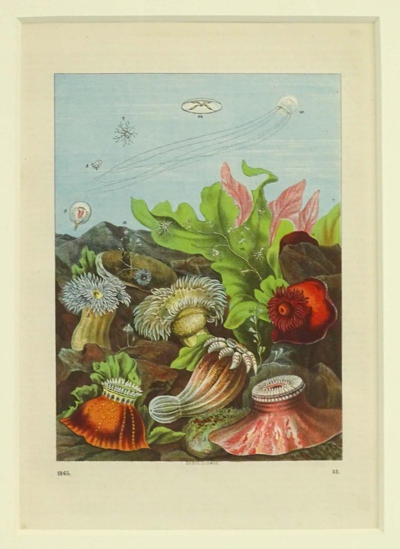 Pair Early Fish Prints - 2