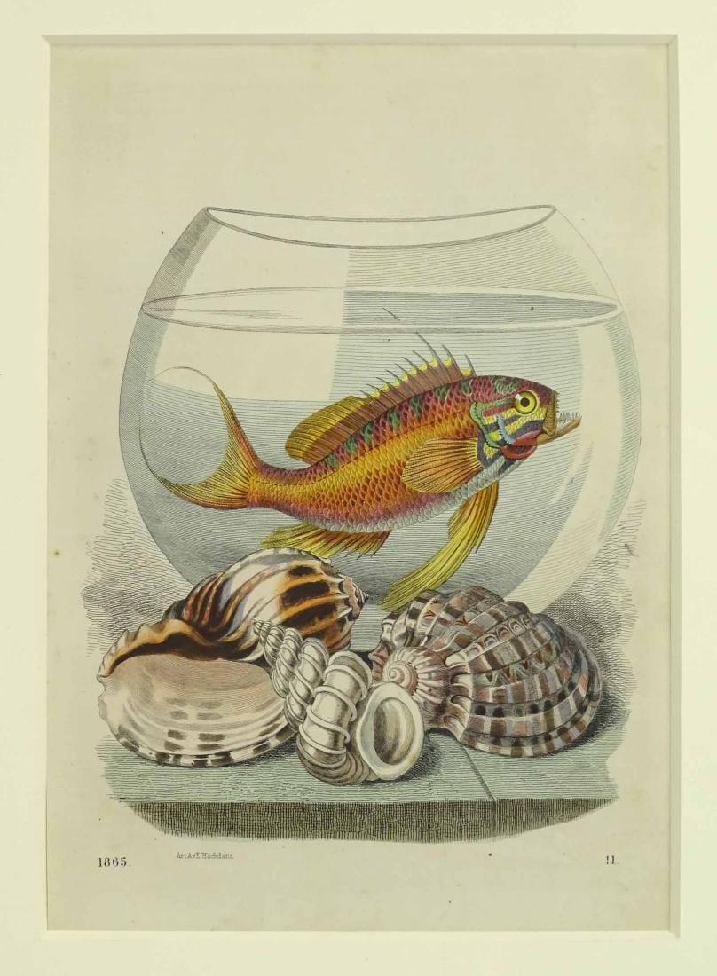 Pair Early Fish Prints - 3