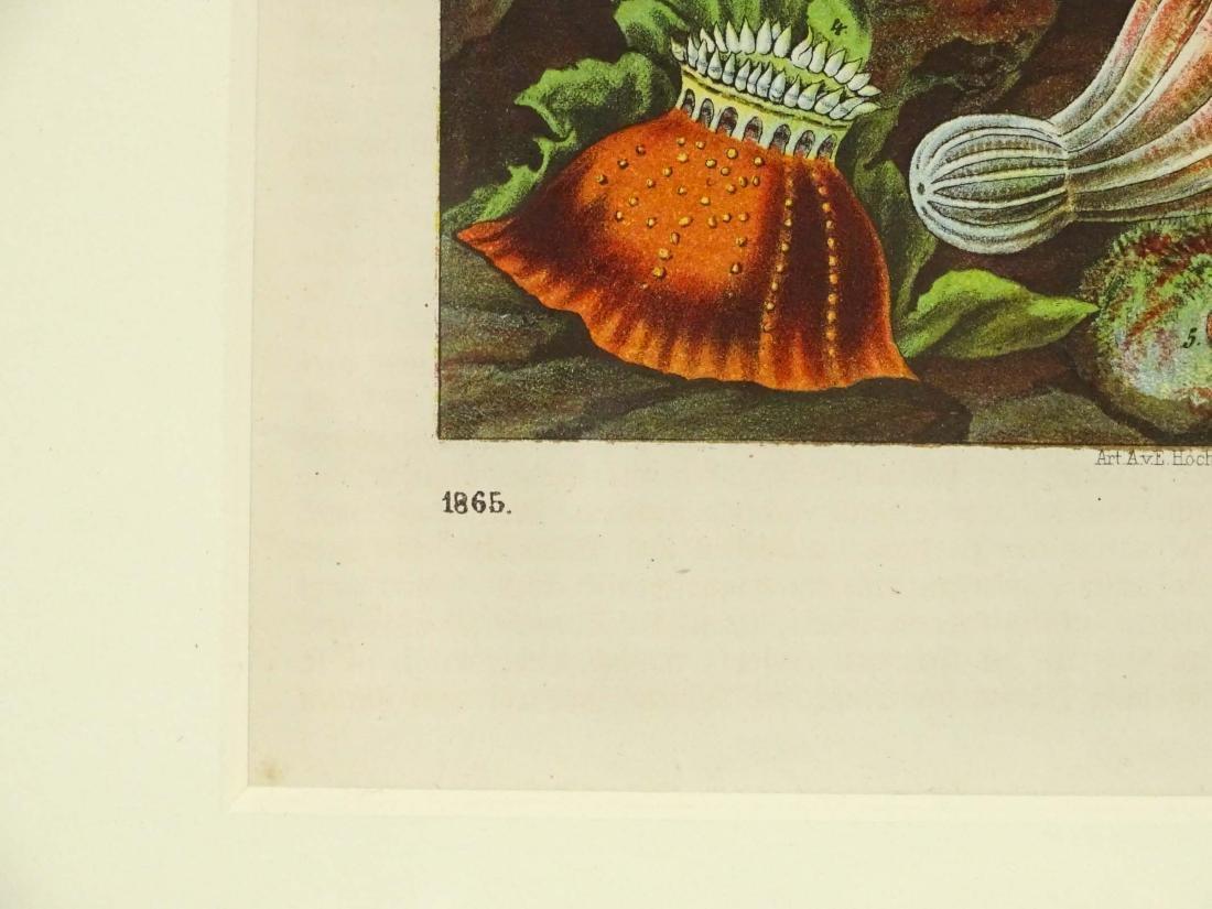 Pair Early Fish Prints - 4