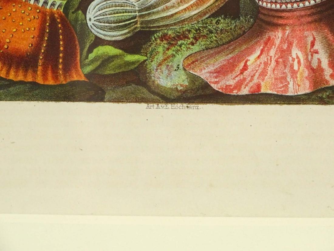 Pair Early Fish Prints - 5