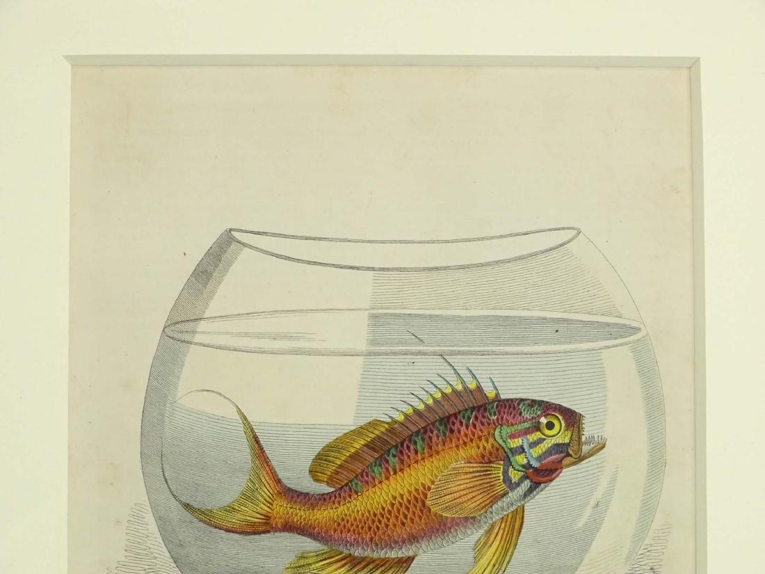 Pair Early Fish Prints - 6