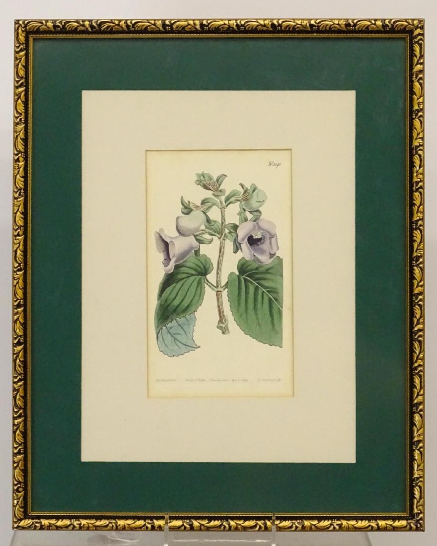 Botanical Studies - 2