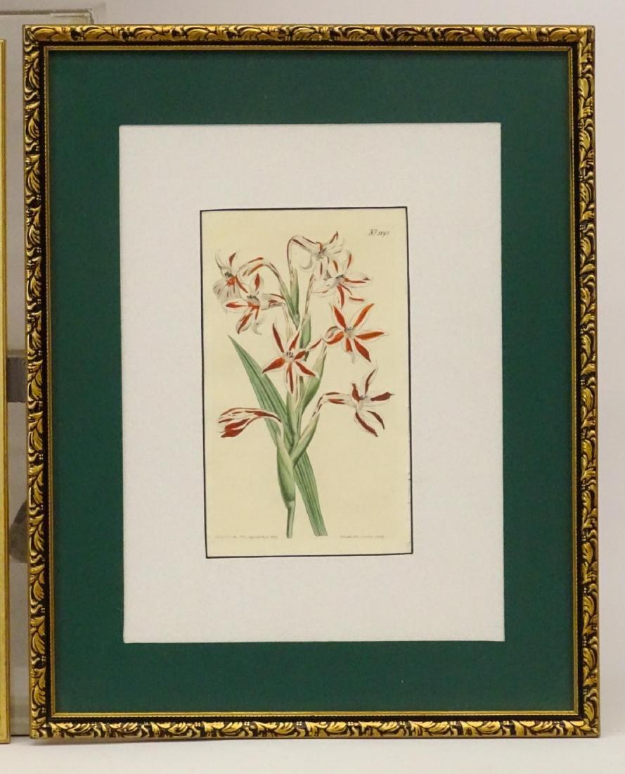 Botanical Studies - 4