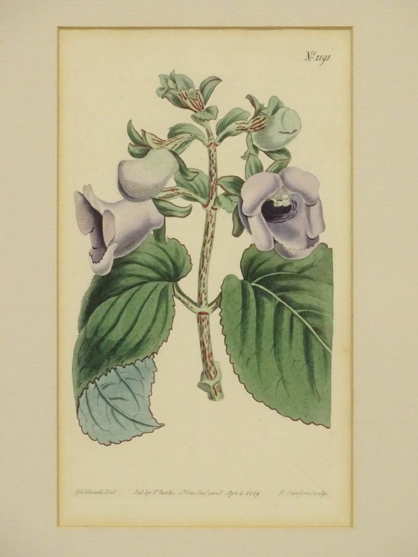 Botanical Studies - 5