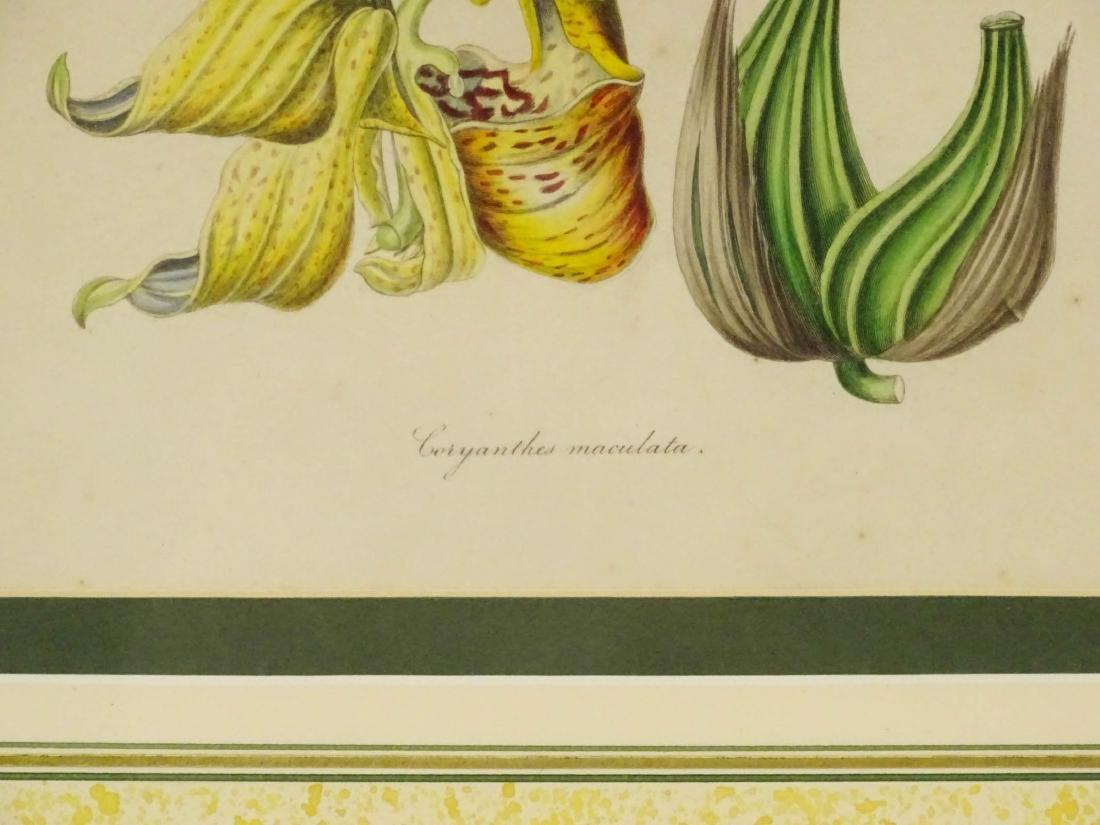 Botanical Studies - 6