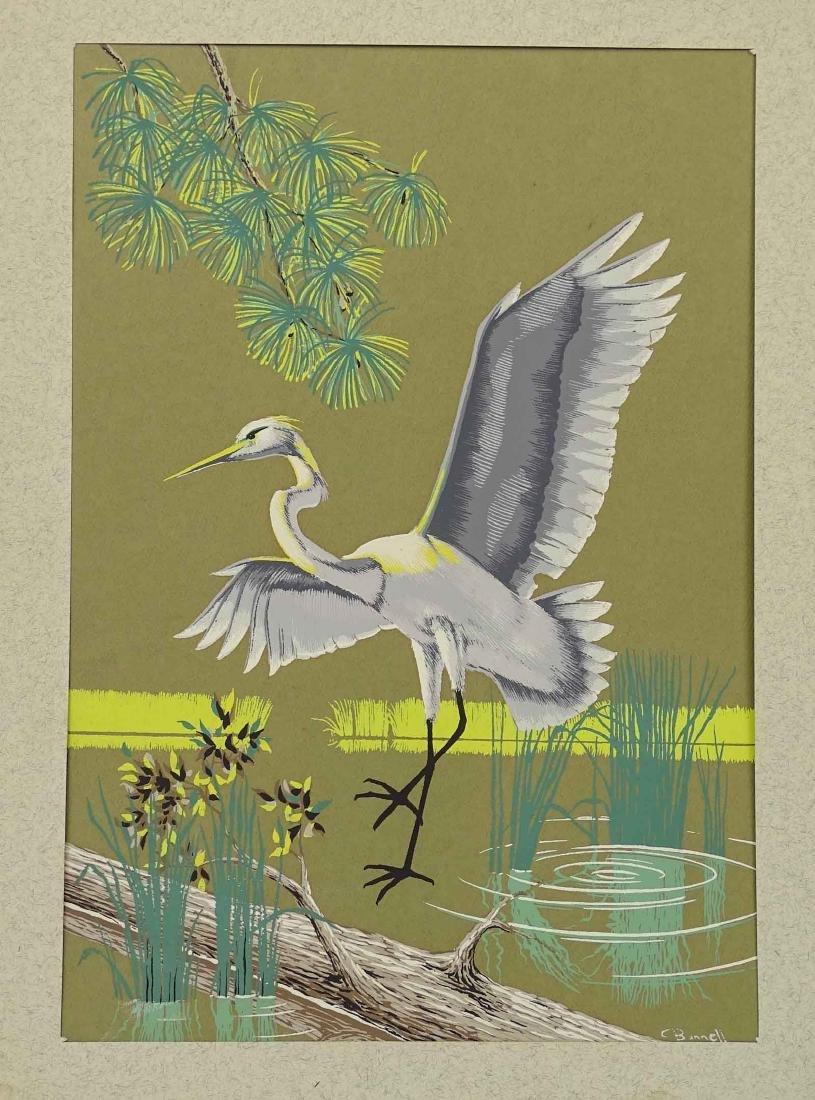 C. Banneli, Pair Bird Subjects - 2