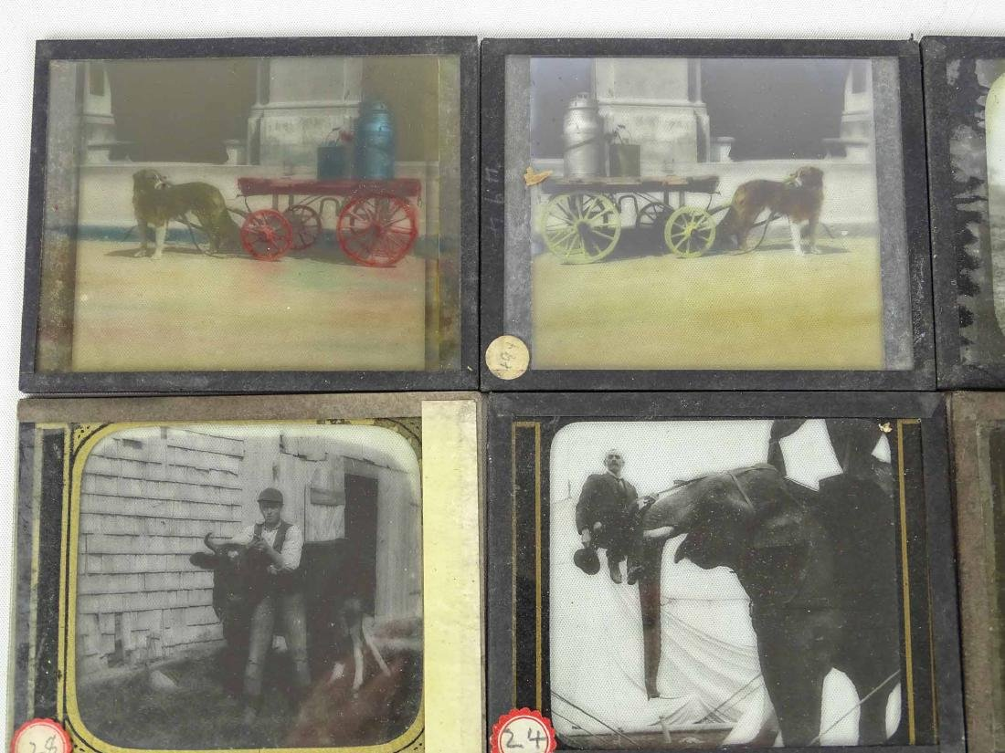 Early Glass Slides - 2