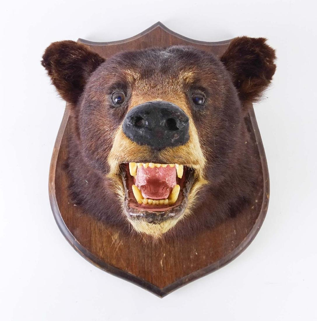 Taxidermy Mounted Bear Head