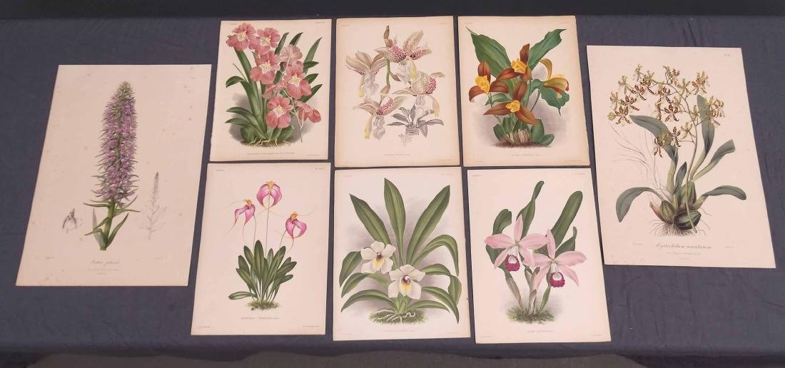 Orchid Botanical Antique Prints (8)
