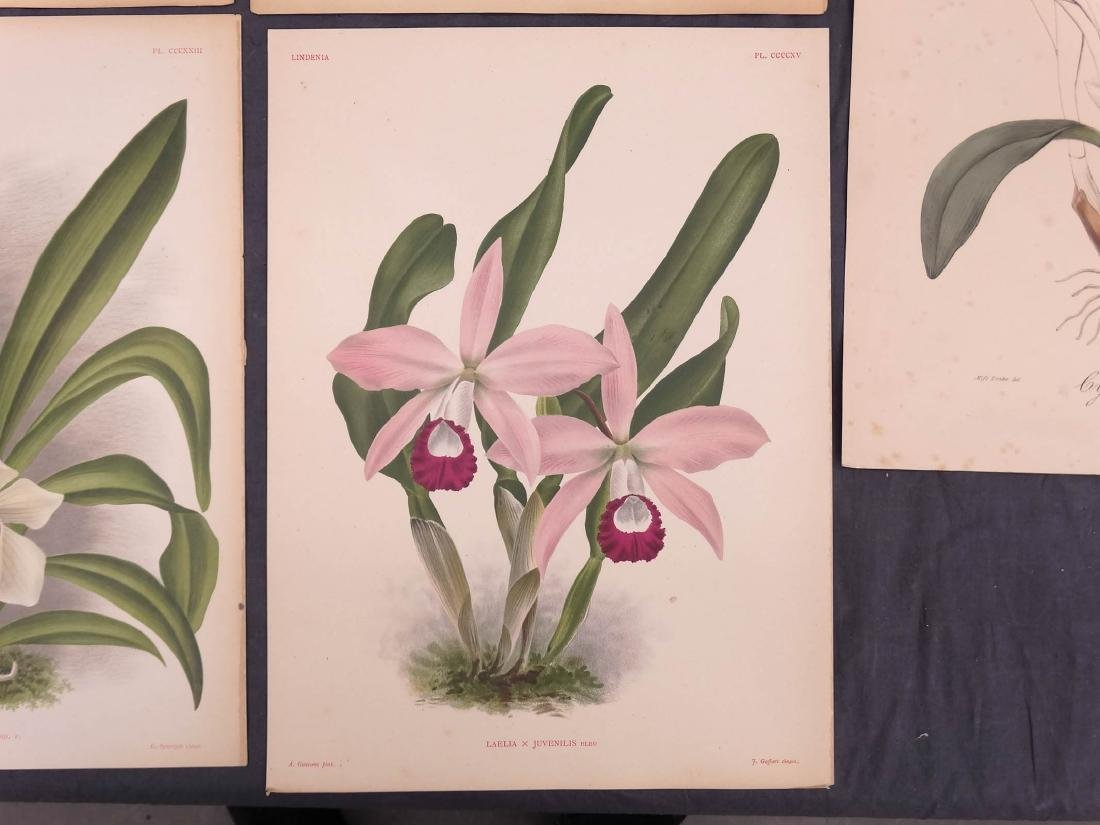 Orchid Botanical Antique Prints (8) - 2